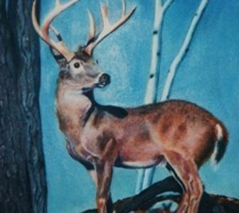 artist-oil painting white tail details